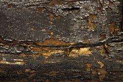 сгорели древесина Стоковая Фотография RF