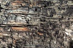 сгорели древесина Стоковое Изображение RF