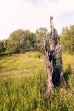 Сгорели ствол дерева Стоковые Фото
