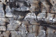Сгорели текстурой, который доски сосны Стоковые Фото