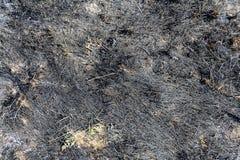 сгорели трава Стоковые Изображения