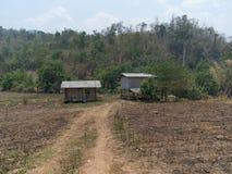 Сгорите вниз кукурузное поле Стоковое Фото