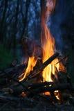 сгорите пущу Стоковые Изображения