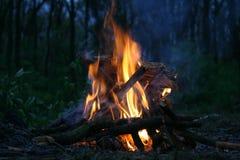 сгорите пущу Стоковая Фотография RF