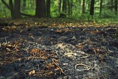 сгорите пущу Стоковое Изображение