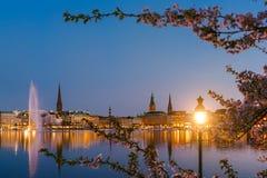 Сгорите фонарик между ветвями цветков вишневого цвета на спокойных и красивых реке Alster и ратуше Гамбурга - стоковое фото rf