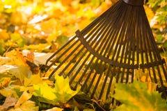 Сгребалка и листья стоковое изображение rf