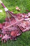 сгребалка листьев Стоковая Фотография