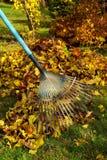 сгребалка 03 листьев Стоковые Изображения RF