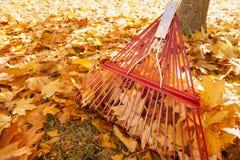 Сгребать выходит деталь грабл металла полагаясь вверх против хобота дерева клена с кучами ярких желтых листьев на том основании стоковые изображения rf