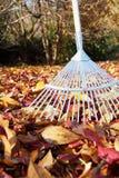 сгребать листьев осени Стоковое Изображение