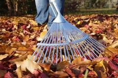 сгребать листьев осени Стоковые Изображения