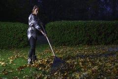 сгребать листьев Стоковые Изображения