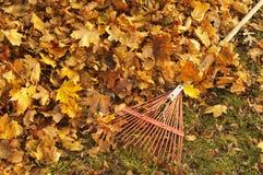 Сгребать листья стоковое фото rf