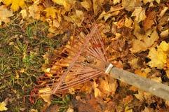 Сгребать листья стоковые фото