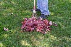 сгребать листьев Стоковое Изображение RF