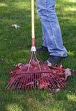 сгребать листьев Стоковое фото RF