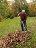 сгребать листьев Стоковые Фото