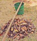 Сгребать листья Стоковое Изображение RF