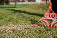 сгребать травы стоковые фотографии rf