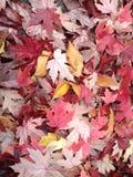 Сгребенные листья Стоковое Изображение RF