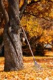 Сгребите рядом с деревом в саде осени стоковые изображения