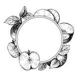Сделайте эскиз к выгравированной рамке с яблоками, разветвите и листья Apple Стоковое Изображение