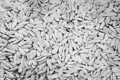 09 20 сделали вопросами семян год солнцецвета Для текстуры или предпосылки Стоковые Фото