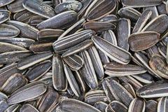 09 20 сделали вопросами семян год солнцецвета Семена с раковиной Картина крупного плана текстуры семян подсолнуха как предпосылка Стоковая Фотография RF