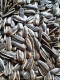 09 20 сделали вопросами семян год солнцецвета Стоковая Фотография RF