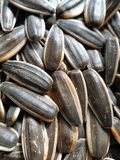 09 20 сделали вопросами семян год солнцецвета Стоковое Фото