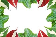 сделанные листья рамки Стоковые Изображения RF