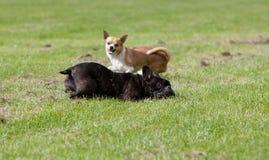 сдерживая собака стоковое фото rf