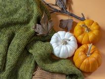 Сдирать тыквы осени положения с вязать свитером и высушенными листьями стоковая фотография rf