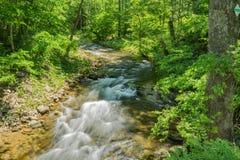 Северная заводь - одичалый поток форели горы - 6 стоковая фотография rf