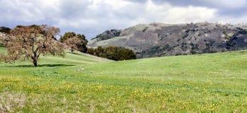 Северная калифорния благоустраивает на зимний день Стоковая Фотография RF