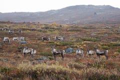 северная Норвегия Стоковая Фотография