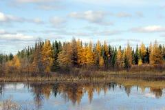 Северная осень Стоковая Фотография RF