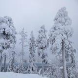 северная Швеция Стоковое Фото