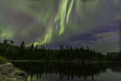 Северное сияние над соснами Стоковая Фотография
