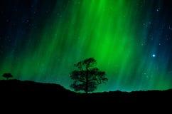 Северное сияние, рассвет Стоковое Изображение