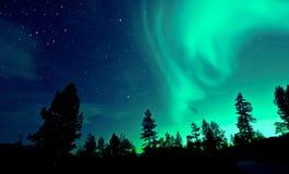 Северное сияние северного сияния над деревьями стоковая фотография rf