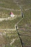 северные виноградники долины rhone стоковые фотографии rf
