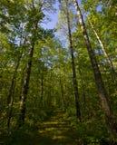 северные древесины путя стоковые фото
