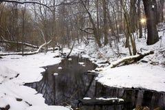 Северные древесины Central Park NY стоковая фотография rf