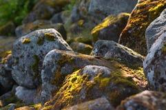 северные камни Стоковое Фото