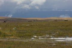 Северные олени в горах Стоковое Изображение