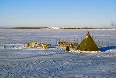 Северные олени в Финляндии Стоковое Изображение RF