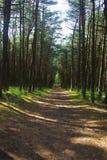 Северные древесины Стоковое Фото