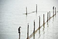 Северный ландшафт моря Стоковое фото RF